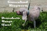 Dog. Singapore. Facial demodectic mange. Generalised ringworm later. toapayohvets