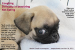 kennel cough 2 month old pug from breeder, toapayohvets, singapore
