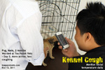 kennel cough complicated, pug warded at Toa Payoh Vets, treatment, singapore
