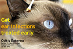 get your cat's itchy ears treated by your vet early, toapayohvets, singapore