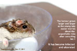 dwarf hamster head tumour grows larger daily, toapayohvets,singapore