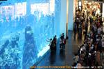 Dubai_Mall_Aquarium_Underwater_Zoo_toapayohvets.jpg