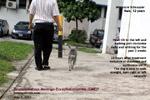 GME_Schnauzer_12years/granulomatous-meningo-encephalomyelitis-suspected-old-miniature-schnauzer-toapayohvets-singapore