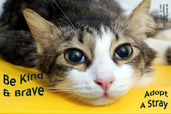 How To Adopt A Stray Cat In Singapore