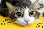 Stray cat is adopted from Cat Welfare Society in a good home