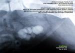 Female Schnauzer, struvite bladder stones, catherisation, urethral, toapayohvets, singapore