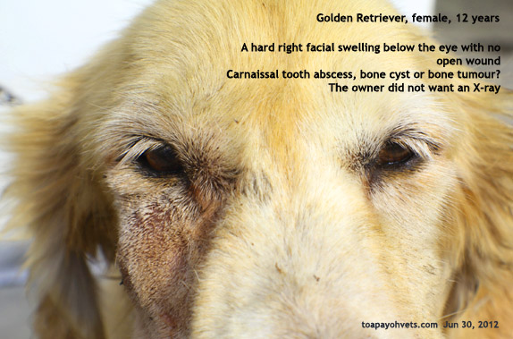 Golden retriver anal glands