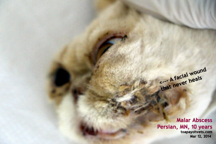 vn feline canine declaw surgery The declaw surgery represents a permanent solution to these problems however, it is popularly held that a number of adverse conditions result from declawing, and that it is a form of mutilation pet owners need to sort out the facts from the rumors surrounding this procedure, as well as understand all of the options involved.