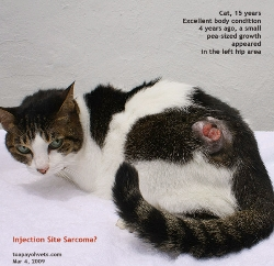 Injection site sarcoma should be removed when it is very small. Toa Payoh Vets