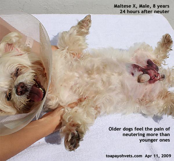 20090224Hamster medicine & surgeryASingapore veterinary ...
