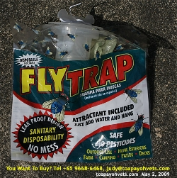 No Pesticide Fly Trap For Sale. Toa Payoh Vets. Tel  +65 9668-6468, asiahomes.com
