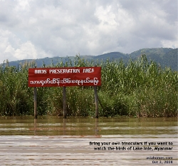 Bird Watching in Lake Inle, Myanmar. Asiahomes.com Travels and Tours