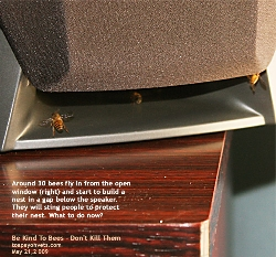 Bees nesting inside master bedroom, fly in via window, HDB Apartment, Toa Payoh Vets