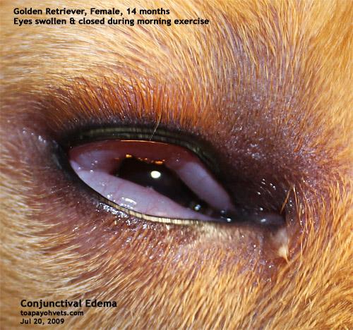 how to fix swollen eye from allergies