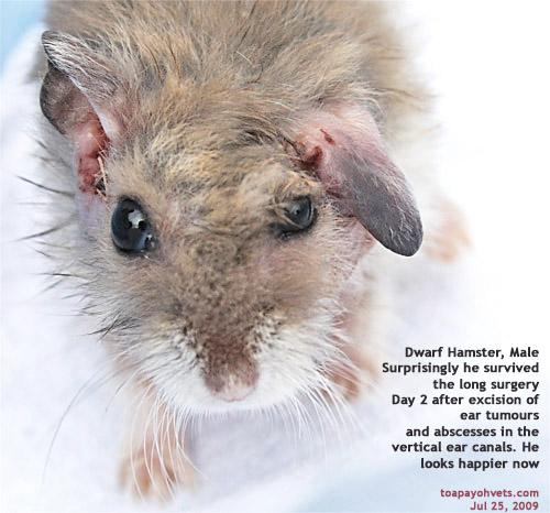 031001ASingapore Veterinary Dystocia Emergency Caesarians