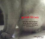 Stray Cat Female Large Tumour Toa Payoh Vets