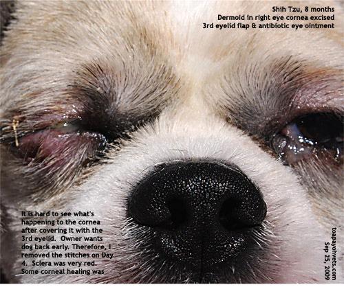 Dog Rd Eyelid Showing