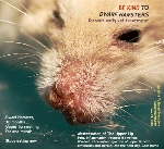 Dwarf Hamster, 10 months. Swollen upper lip. Abscessation. Toa Payoh Vets