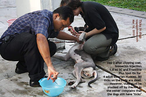 Veterinary Medicine Surgery Singapore Toa Payoh Vets