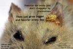 singapore dwarf hamster, ear warts, toa payoh vets