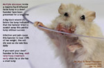 dwarf hamster, multiple abscesses in a facial lump, toapayohvets singapore