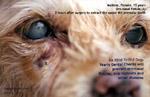 15 years old dog. oro-nasal fistula, carnaissal tooth abscess, toapayohvets, singapore