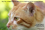 Born free as a stray cat, singapore, toa payoh, sunshine, stalking bird, insects, toa payoh vets