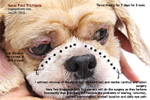 shih tzu corneal ulcers - nasal fold hairs irritate cornea daily, toapayohvets singapore