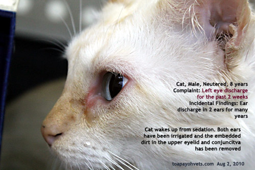 Colloidal Silver Ear Infection Cat