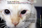 cat, male, 8 years, eye infection, no ulcer, tearing 2 weeks, toapayohvets, singapore