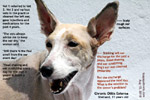 11-year-old sheltand collie, head shaking and ear rubbing for 4 years, chronic otitis externa, toapayohvets, singapore