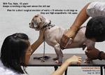 old dog, viral papillomas, warts, generalised, toapayohvets, singapore