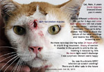 cat malignant cellular infiltrate, likely a malignant melanoma of the nose - toa payoh vets singapore