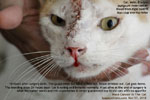 http://www.kongyuensing.com/pic/20101127tn_malignant_nose-cancer-cat-male-8years-toapayohvets-singapore.jpg