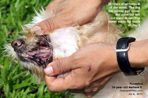 how to stop dog marking without neuter