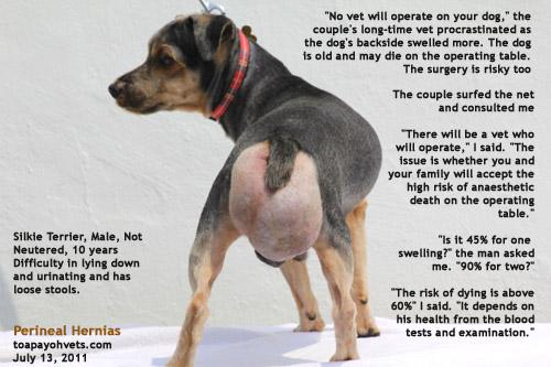 Neutered Dog Has Large Lumps