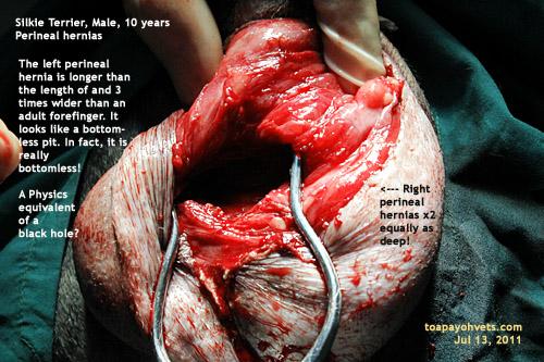 Perineum http://2010vets.blogspot.com/2011/07/505-25-hour-perineal ...