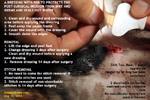 Neuter post-operation dressing care, anaesthesia, Shih Tzu Male 7 years, toapayohvets, singapore