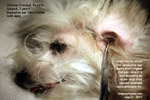 plucking excessive ear hairs is part of grooming