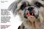Pemphigus auto-immune disease dog, toapayohvets, singapore