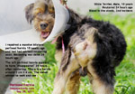 Neuter your male dog to reduce chances of perineal hernia developing during old age. Toa Payoh Vets, Singapore